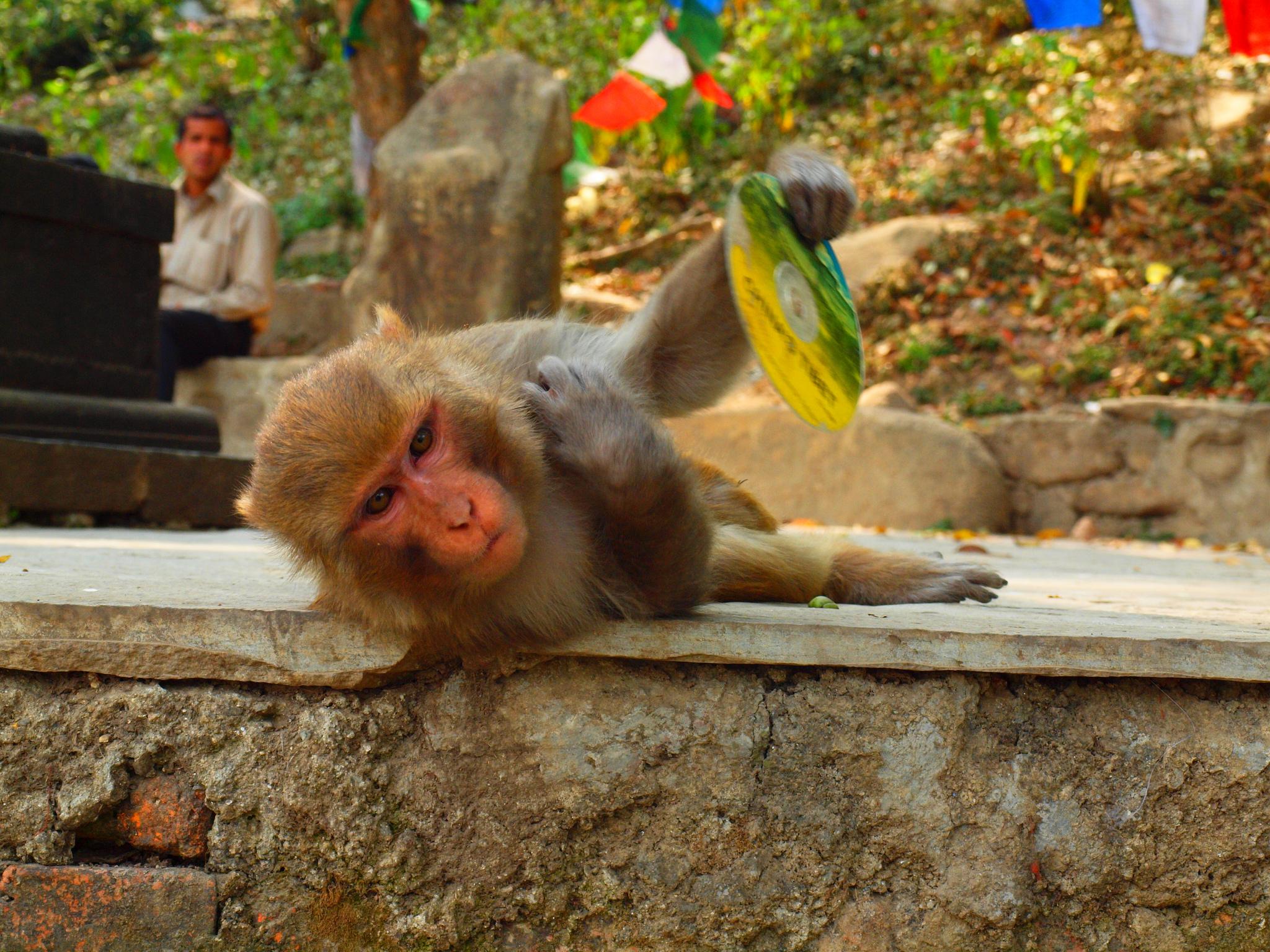 Gaze over Monkeys at Swoyambhunath Stupa & Narayanhiti Palace Museum